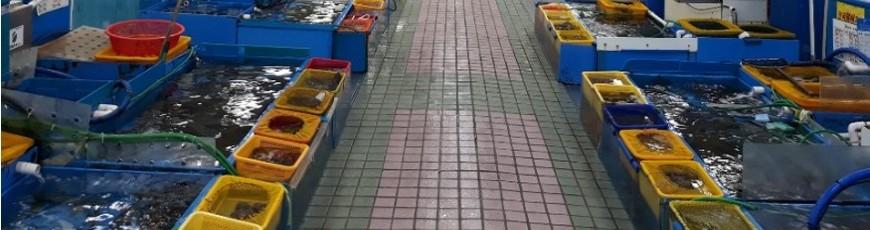 鮮魚や海産物で活気溢れるお店
